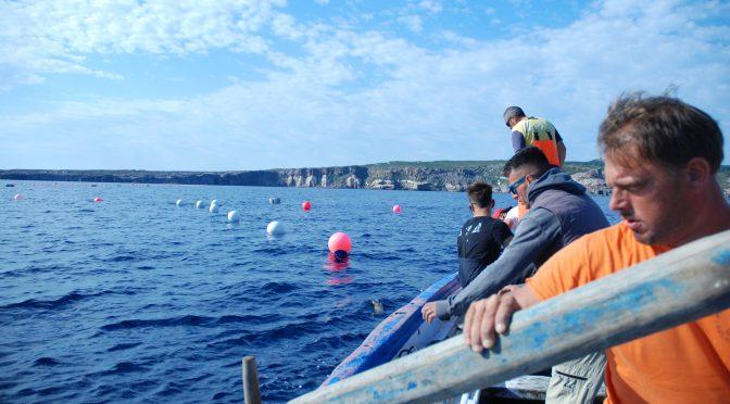 Tunfangst på øen San Pietro er nærmest andægtig