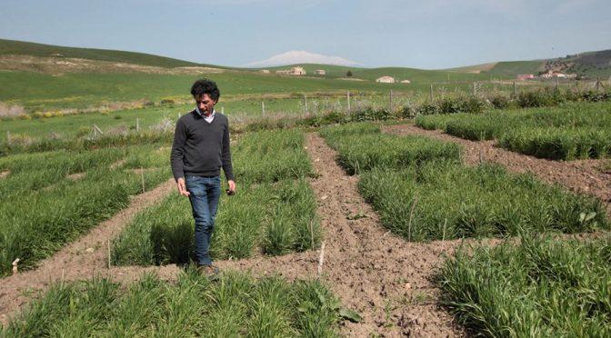 Siciliens bønder kæmper for renere jord og tager kampen op mod de multinationale selskaber